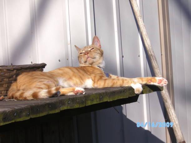 Smiley Cat stock photo