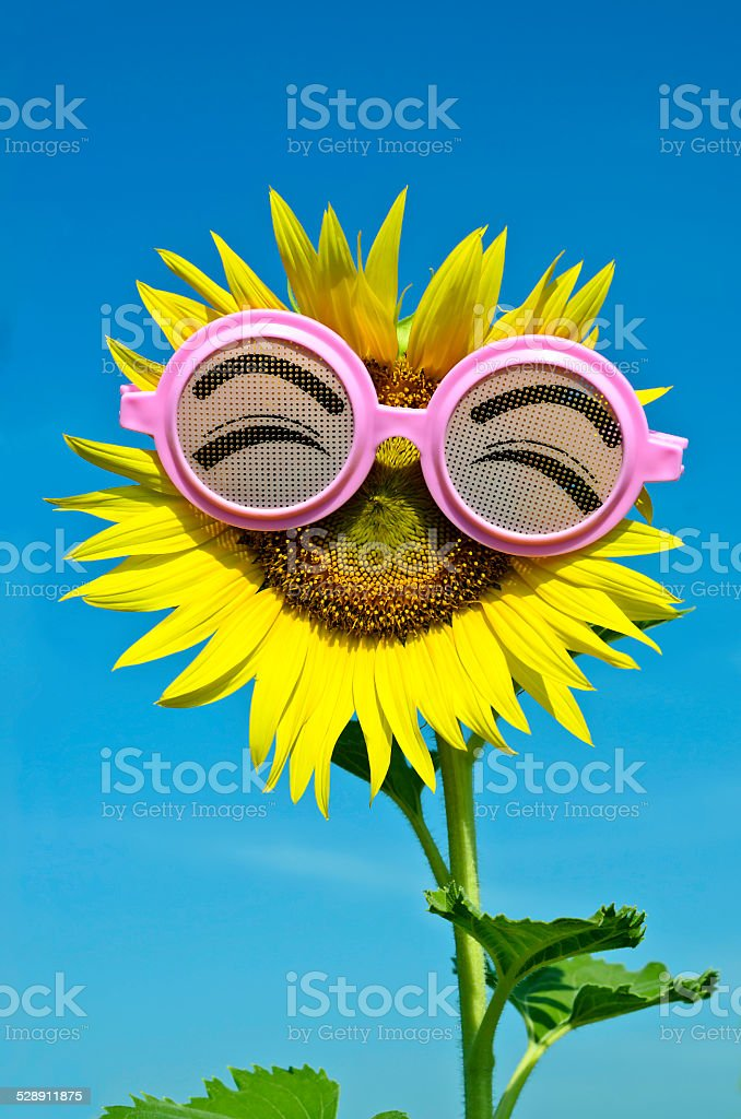 Smiley Sunflower wearing funny glasses under blue sky stock photo