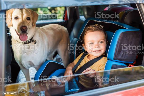 Smiling adorable toddler boy in safety seat with labrador dog on picture id1004149274?b=1&k=6&m=1004149274&s=612x612&h=ggktzggdfeijd8er ew4fhfx  xijolclsaa9mmgmu0=