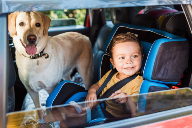 Smiling adorable toddler boy in safety seat with labrador dog on picture id1004149274?b=1&k=6&m=1004149274&s=612x612&w=0&h=m2r27 ryryyyg9dgywzg1xrf7zfpjrueunoq3uqmbug=