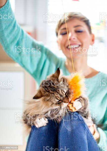 Smiling adult female pet owner playing with her siberian cat picture id1136626333?b=1&k=6&m=1136626333&s=612x612&h=4kmpjl5cdwhigrddc59dadmm9uu8rl6rlltmjap8hrs=