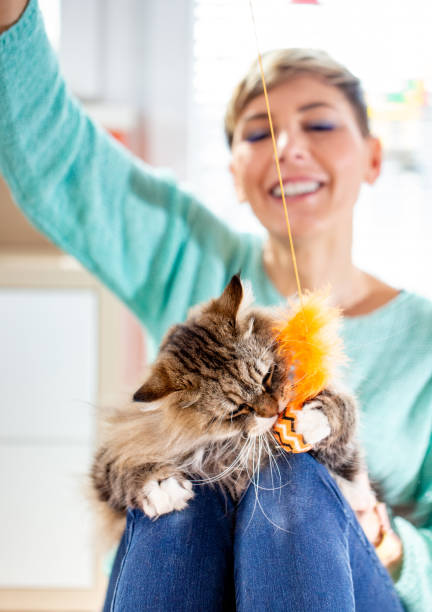 Smiling adult female pet owner playing with her siberian cat picture id1136626333?b=1&k=6&m=1136626333&s=612x612&w=0&h=tlorzyjtq tpw2cabzmqunkqdxqm36ys6ohvtngiip4=