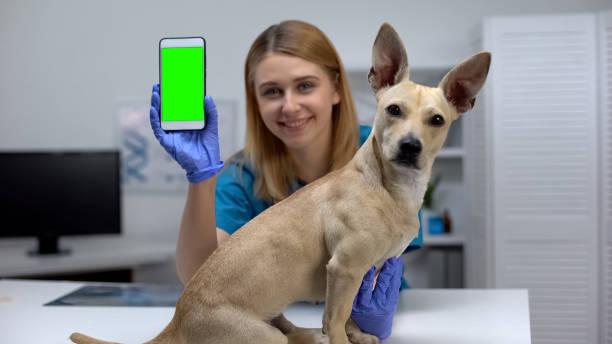 Smiling animal clinic doctor showing green screen phone online pet picture id1175587746?b=1&k=6&m=1175587746&s=612x612&w=0&h=fuqnj6g2h9vit2jgrzd5c1vlpepj 2pz lzxweya18c=