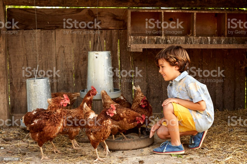 Smiling boy looking at hens in coop on sunny day stock photo