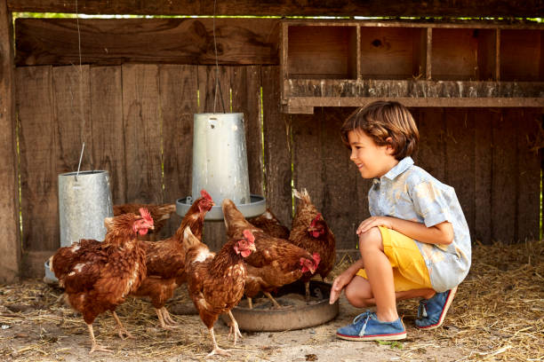 smiling boy looking at hens in coop on sunny day - gallina foto e immagini stock