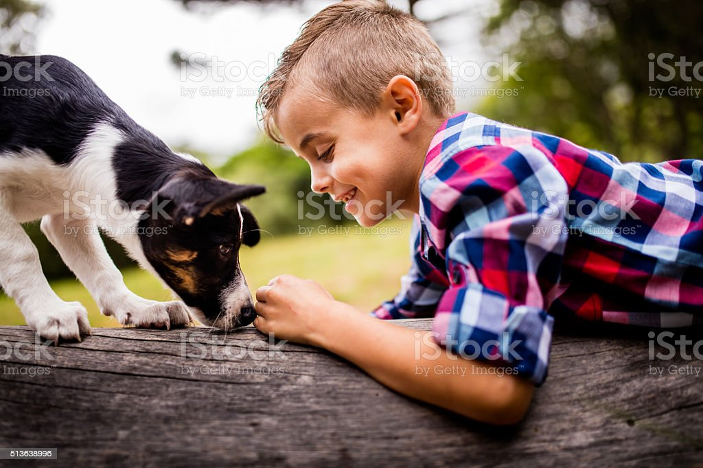 Smiling Boy lying on log in nature facing puppy dog stock photo