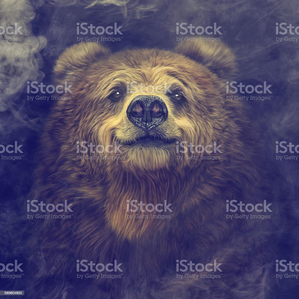 Smiling brown bear in the smoke stock photo