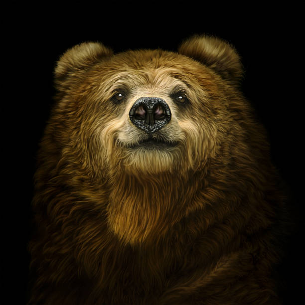 Smiling brown bear​​​ foto