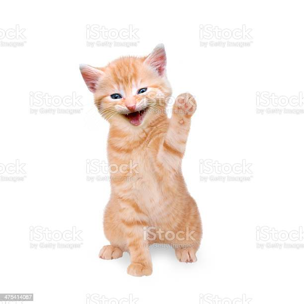 Smiling cat isolated on white background picture id475414087?b=1&k=6&m=475414087&s=612x612&h=crx5zktcmzrw1bhxxcjjsgafopqrnwb2opitpkwmp4a=