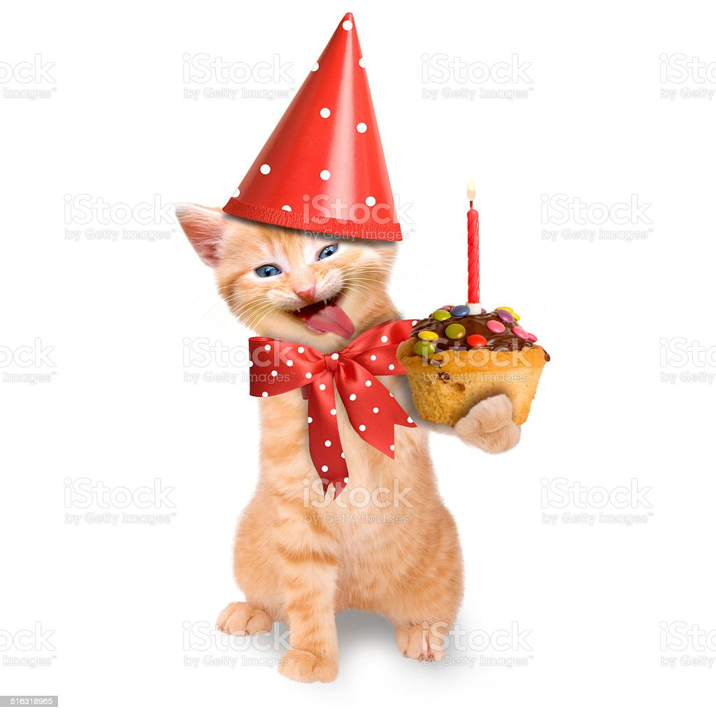Smiling Cat Kitten Happy Birthday Isolated Stock Photo - Download Image Now  - iStock