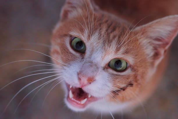 Smiling cat picture id1018874508?b=1&k=6&m=1018874508&s=612x612&w=0&h=6qhrn6sqm5cgfah9zt2pw gikc9goy joclwjsfy51e=