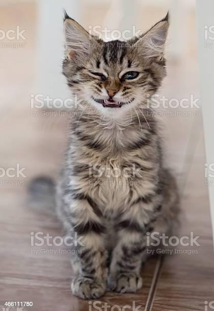 Smiling cat picture id466111780?b=1&k=6&m=466111780&s=612x612&h=hial235lpajsiu oxeegsxdn1pcfeckfpgbp0ikslrg=