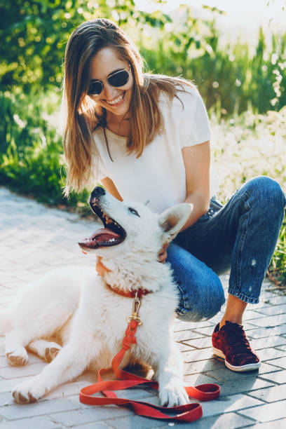 Smiling caucasian girl dressed in blue jeans and white t-shirt is playing joyfully with her dog in a the light of the sun stock photo