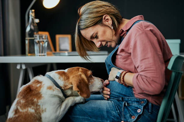 Smiling charming caucasian pregnant woman sitting at home office, touching belly and looking at her beloved dog. Dog is curious and wants to play with her. stock photo