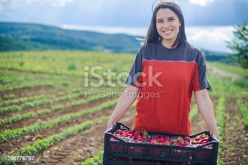 A view of a woman holding a crate full of strawberries. She's standing on a strawberry field in an agricultural zone, far from the city. Mountain's silhouette and vast fields displayed in the background.