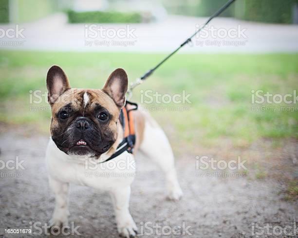 Smiling dog picture id165051679?b=1&k=6&m=165051679&s=612x612&h=ym7jgorpqv4ds5pnojck4ticjwutrwifzytl7aqmghs=