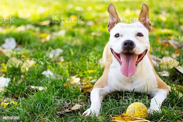 Smiling dog picture id497157050?b=1&k=6&m=497157050&s=612x612&h=7a79tjwkoqjicbcinzojbe6set4jjinckmtatvzobfm=