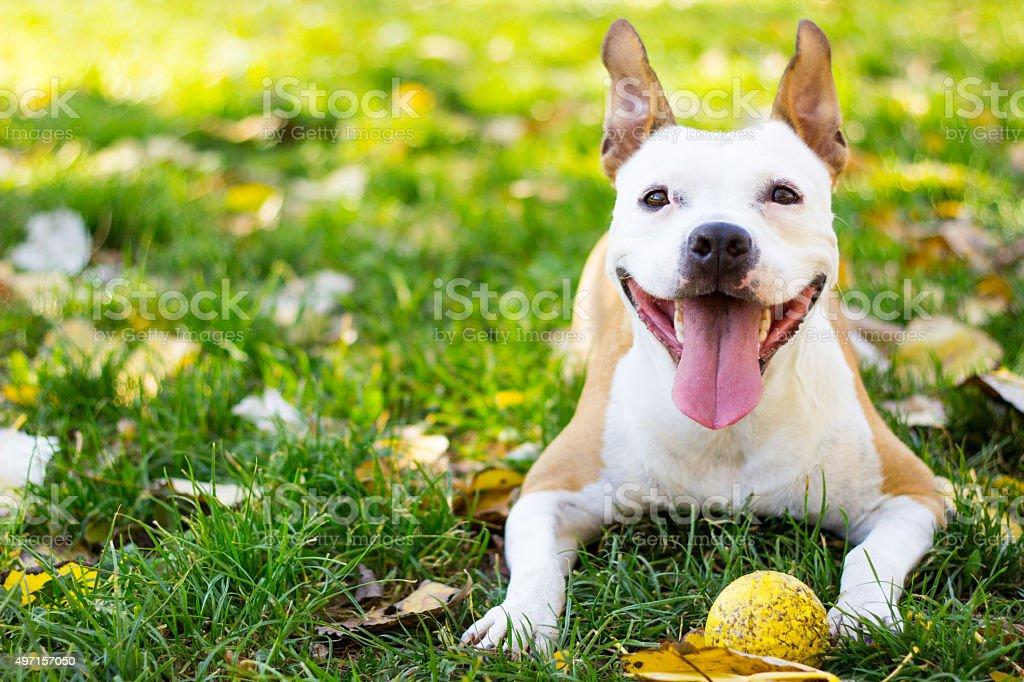Smiling dog stock photo