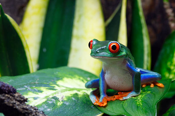 A smiling frog on a green leaf stock photo
