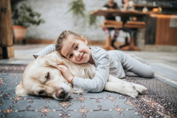 Smiling girl and her golden retriever on carpet at home. stock photo