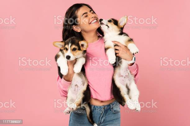 Smiling girl holding welsh corgi puppies isolated on pink picture id1177399031?b=1&k=6&m=1177399031&s=612x612&h=aiqk2rvdpqchr6tepu9yyl9qy6bdczunsz55aojds0a=