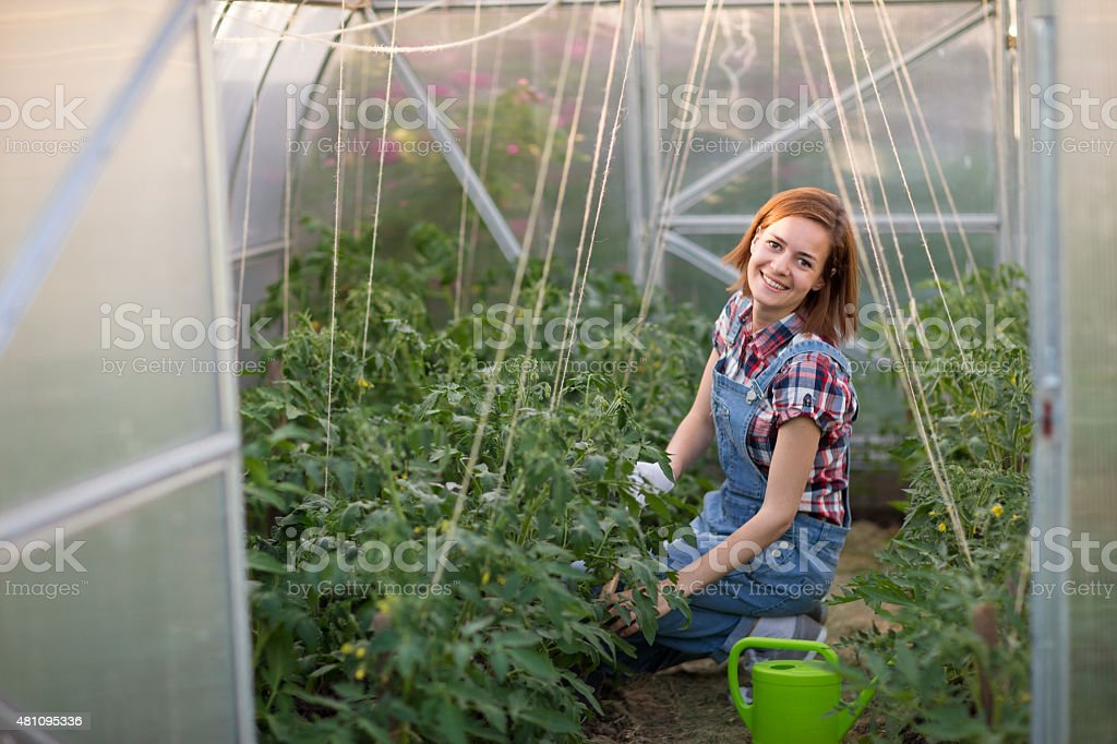 Smiling girl in a greenhouse stock photo