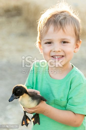 Caucasian Smiling little child boy holding a little baby duck