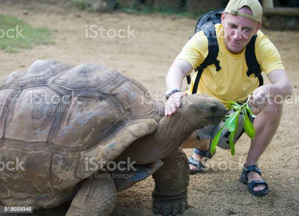 Smiling man feeds with a green branch a big seychelles turtle and picture id918669946?b=1&k=6&m=918669946&s=612x612&h=wtsqy6corwipxswpcaaboivbv0 cf9a30qk7855cs3g=