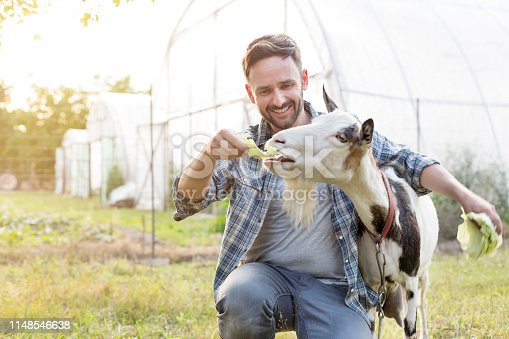 Smiling mid adult man feeding cabbage to goat at farm