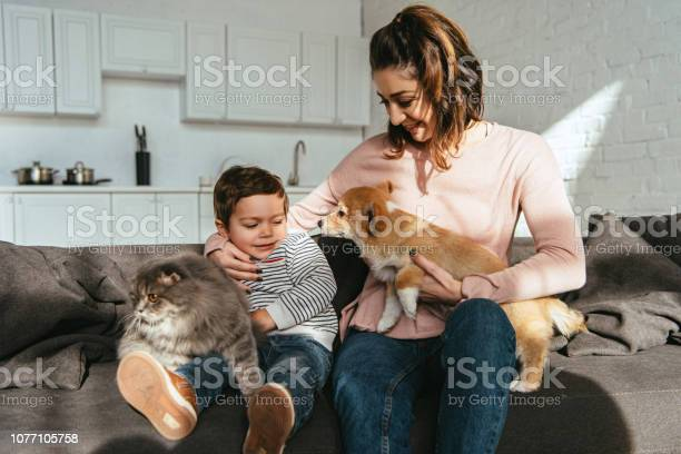 Smiling mother and son sitting on sofa with cat and dog in living at picture id1077105758?b=1&k=6&m=1077105758&s=612x612&h=qj0636xwlkvqu3zpzwlkutxaqcjuwqlngmcvic j8qq=