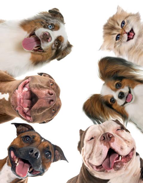 Smiling pet picture id1217320132?b=1&k=6&m=1217320132&s=612x612&w=0&h= qghhqrbwrlgdniacvlp677ns96k42ub hi7wfxywn4=