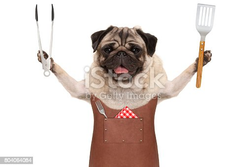 istock smiling pug dog wearing leather barbecue apron, holding meat tong and spatula 804064084