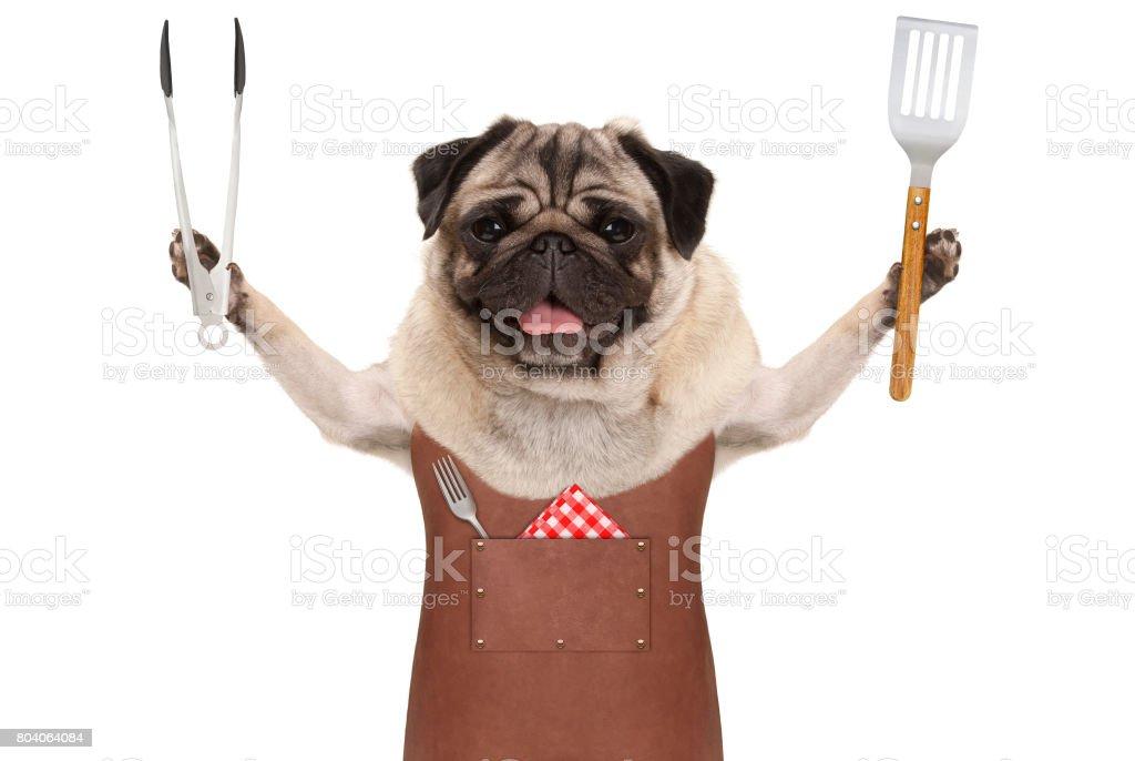 sourire de chien carlin cuir barbecue tablier, tenant la spatule et tong, viande - Photo
