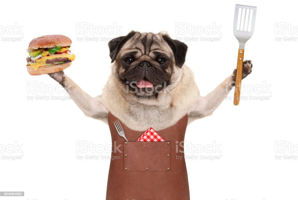 sourire de chien carlin cuir barbecue tablier, brandissant des hamburger et spatule - Photo