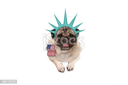 istock smiling pug puppy dog holding American flag, hanging on white banner, wearing lady Liberty crown 985155232