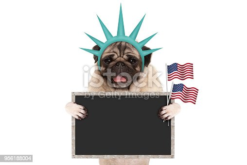 istock smiling pug puppy dog holding up American flag and blank blackboard sign, wearing lady Liberty crown 956188004