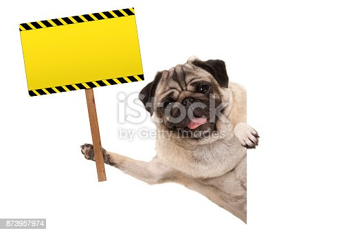 istock smiling pug puppy dog holding up blank rectangular  yellow warning sign 873957974