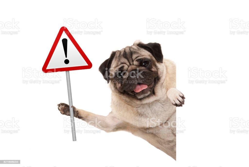 lachende pug puppy hondje bedrijf in rode waarschuwing, aandacht verkeersbord foto