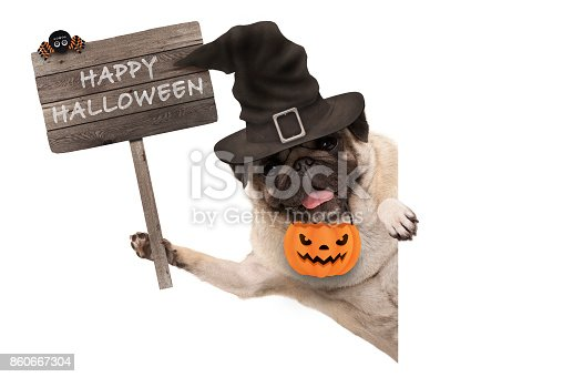 istock smiling pug puppy dog holding up wooden sign with happy halloween and wearing witch hat and pumpkin 860667304