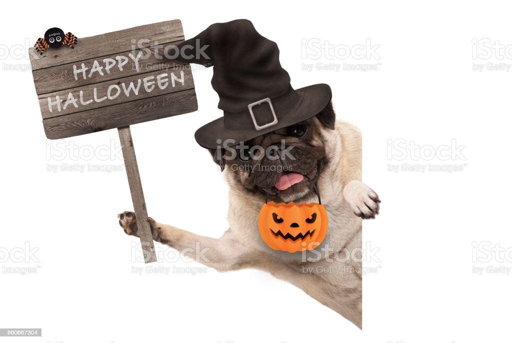 lachende pug puppy hondje bedrijf in houten bord met vrolijke halloween en het dragen van de heks hoed en pompoen foto