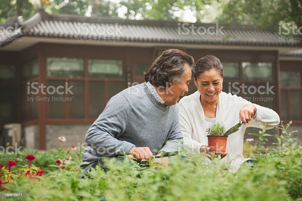 Smiling senior couple in a garden stock photo