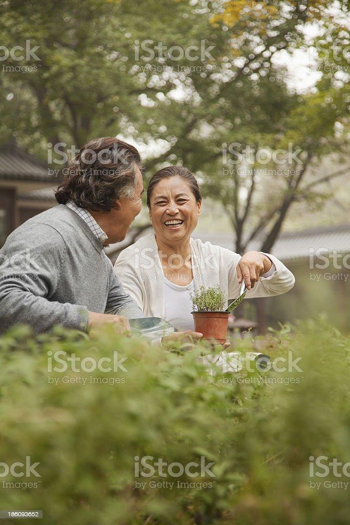 Smiling senior couple in garden stock photo
