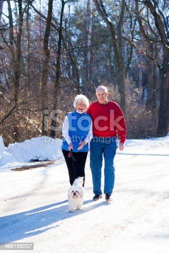 874818944 istock photo Smiling senior couple walking their dog outdoors 466159207