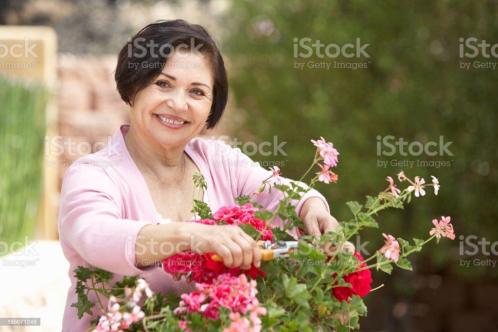 A smiling senior Hispanic woman working on a garden stock photo