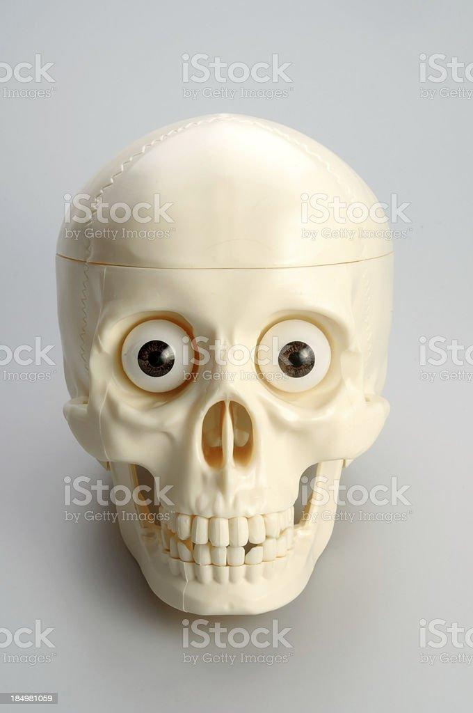 Smiling Skull stock photo