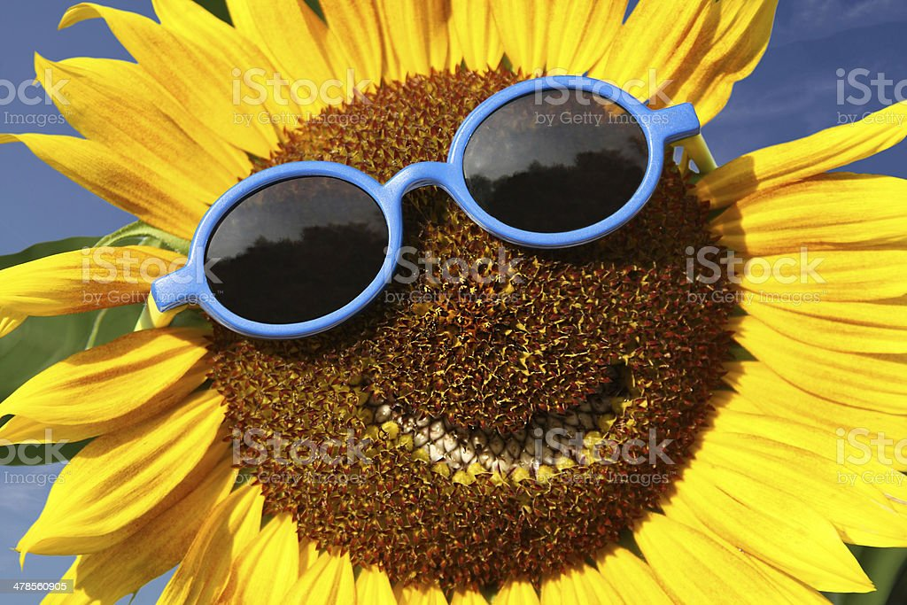 Smiling sunflower stock photo