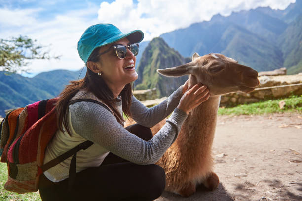 Smiling tourist woman with lama stock photo