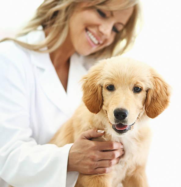 lächeln tierarzt mit gesunden hund. - hundeplätze stock-fotos und bilder