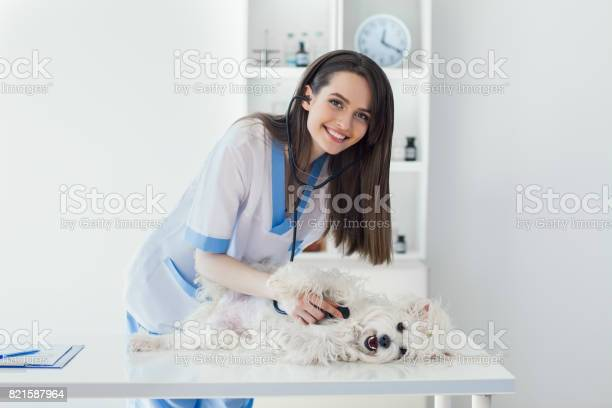 Smiling veterinarian doctor examining cute white dog in clinic picture id821587964?b=1&k=6&m=821587964&s=612x612&h=pmundijxwlwz9edljkyjkfyg99wwuezzvl9xavo8eww=