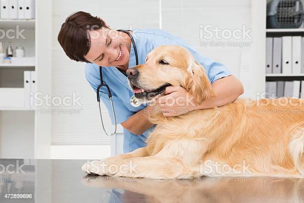Smiling veterinarian examining a cute golden retriever picture id472899696?b=1&k=6&m=472899696&s=612x612&h=xo4bcqa6pkxdyzozrft1ck2x6euzuhcc vkdnwiklra=